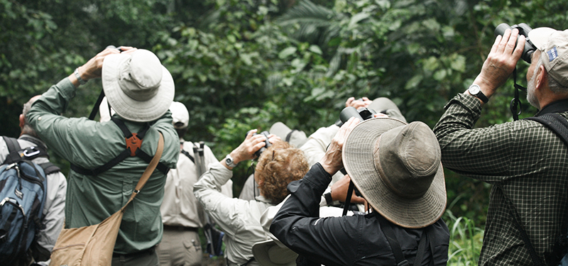 Birders Birding. Image shows a group of people facing away, all holding binoculars to look at an unseen birds in the dark forested background. Photo by Alex Proimos.