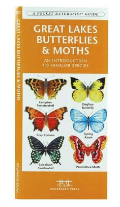 Great Lakes Butterflies & Moths: An Introduction to Familiar Species
