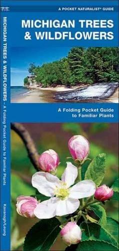 Michigan Trees & Wildflowers: A Folding Pocket Guide to Familiar Plants