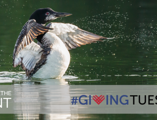 Support Birds and their Habitats in Michigan on #GivingTuesday